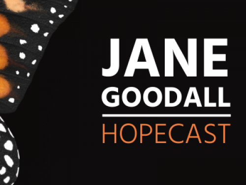 """Dr. Jane Goodall Ushers in Era of Hope with New Podcast, """"The Jane Goodall Hopecast"""""""